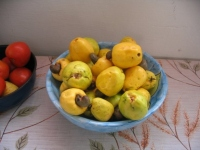 Вяжущие фрукты